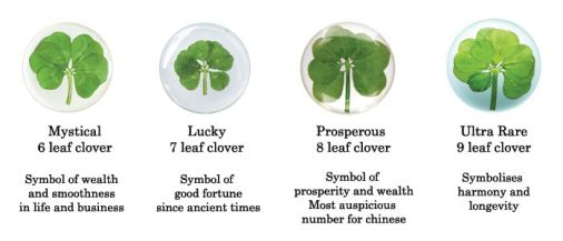 meaning behind finding a four leaf clover Symbolic shamrock meaning and lore: discover the grand spiritual significance behind this unassuming little plant includes four-leaf clover meaning too patrick was passionate about sharing his faith with the people of ireland, and cleverly found associated each leaf of the clover with an aspect of the holy trinity.